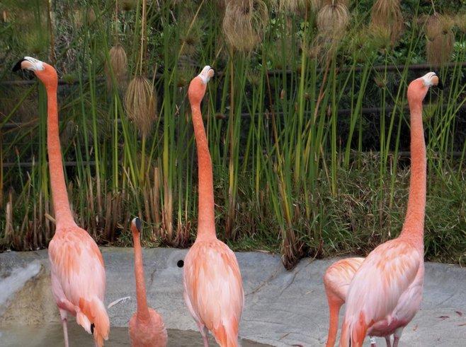 Balboa Park photo