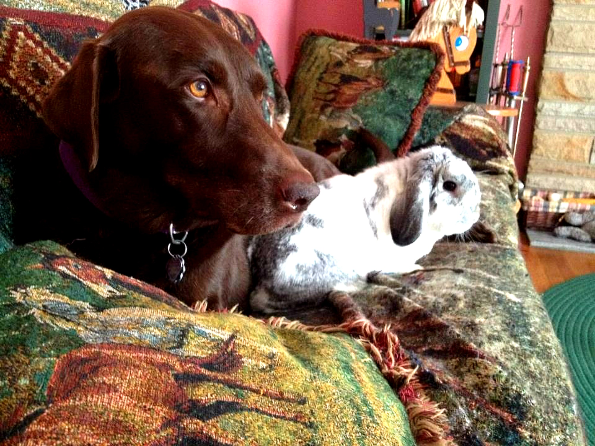Fidget and his best bud Bear