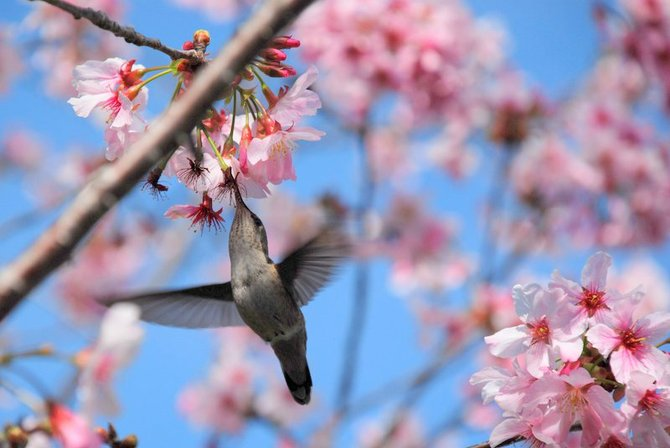 Spring 2013 @ The Japanese Friendship Garden