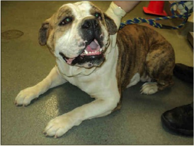 """A dog named """"Snub"""" was adopted out. Evidence photo"""