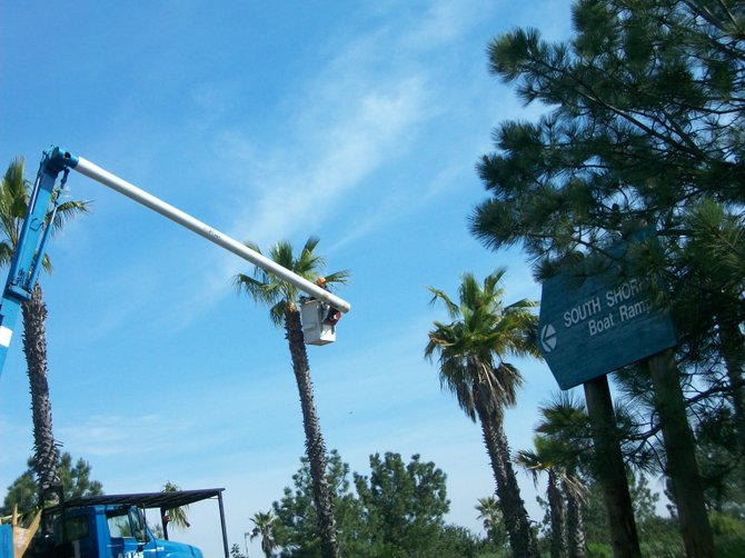 Palm tree trimmers working along Sea World Drive in Mission Beach.