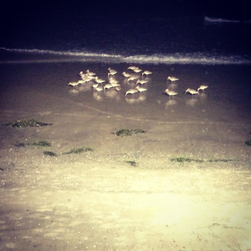 Sandpipers gathered for dinner