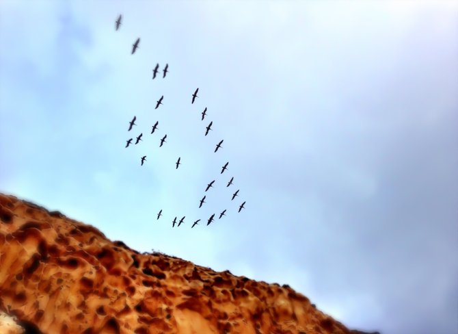 Birds in flight over the cliffs at Torrey Pines.