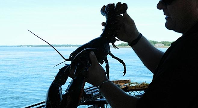 Tasty prince edward island san diego reader for Lobster fishing san diego