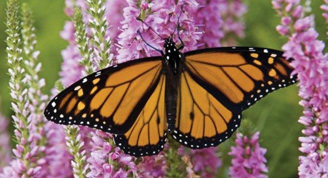 Atraer aves y mariposas al jardín | Su Fácil Jardín