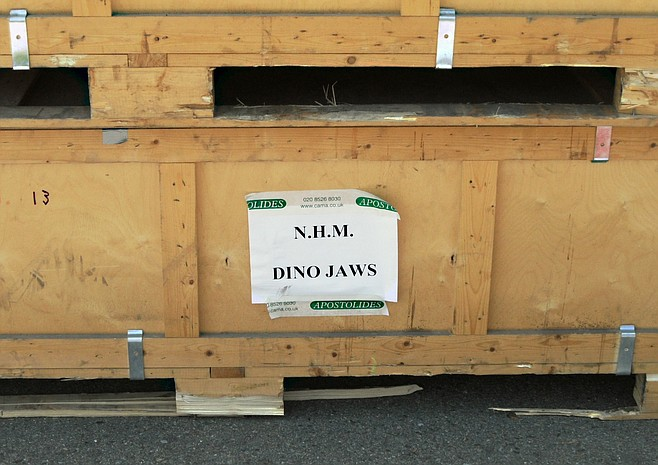 Crate containing dinosaur jaws
