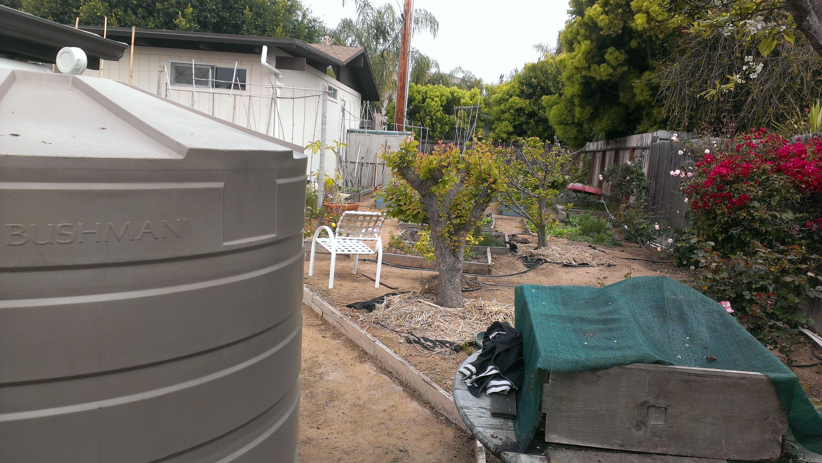 One of three 865 gallon tanks looks over the compost bin and into the garden. There is about three thousand feet of roof draining into these tanks making them overflow after 1.25 inches of rain.