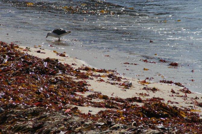 beachcomber - Big Sur
