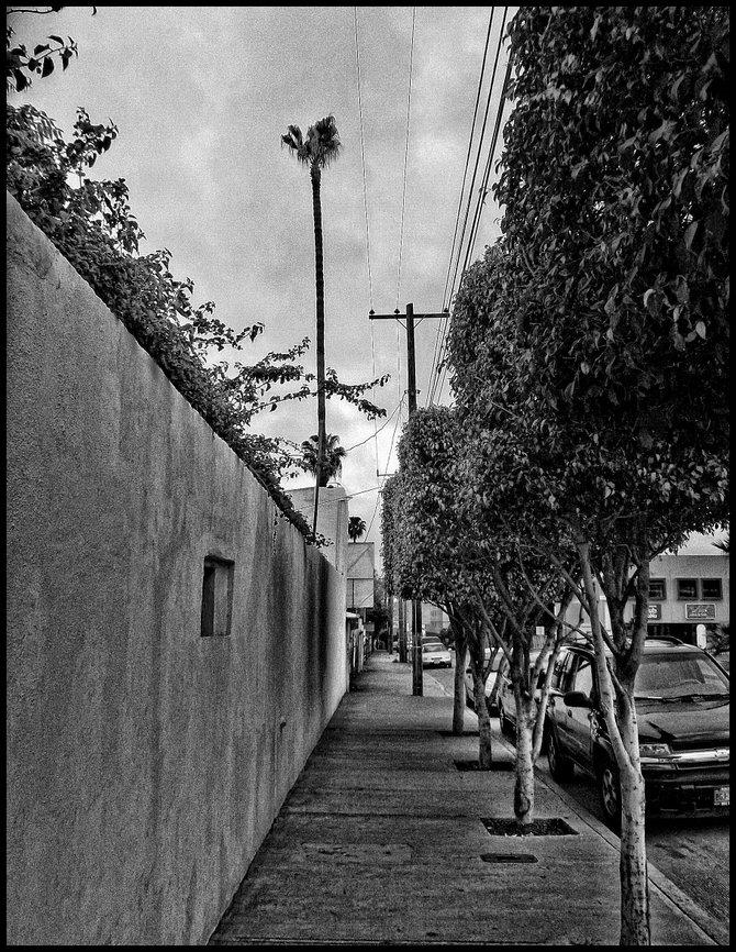 Neighborhood Photos TIJUANA,BAJA CALIFORNIA Wall and trees in Blvd. Cuauhtemoc Sur in Tijuana's Davilas Section/ Barda y arboles en Blvd. Cuauhtemoc Sur en la Colonia Davila de Tijuana.