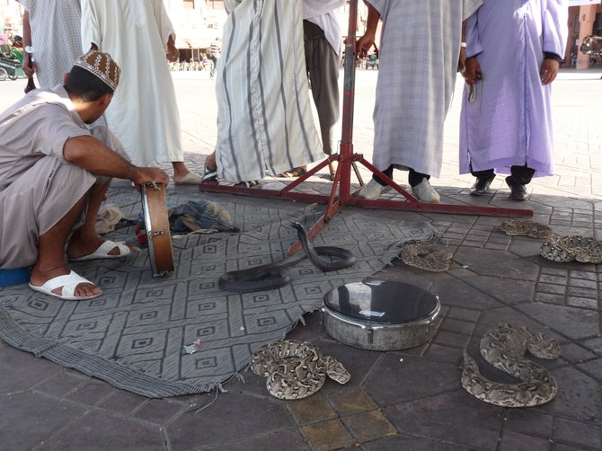 Snake charmer in Marrakesh