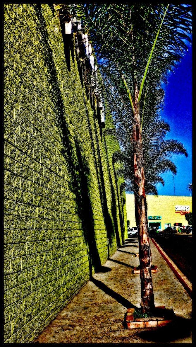 Neighborhood Photos TIJUANA,BAJA CALIFORNIA Wall and palm trees in Plaza Otay in Tijuana/Muro y palmera en Plaza Otay en Tijuana
