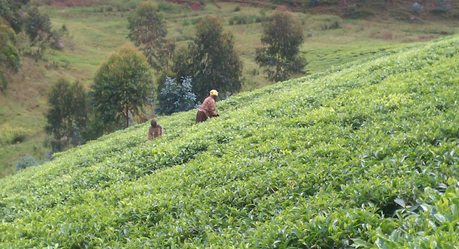 """Land of a Thousand Hills"" – tea farmers by the roadside."