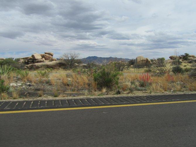 Arizona Desert in April