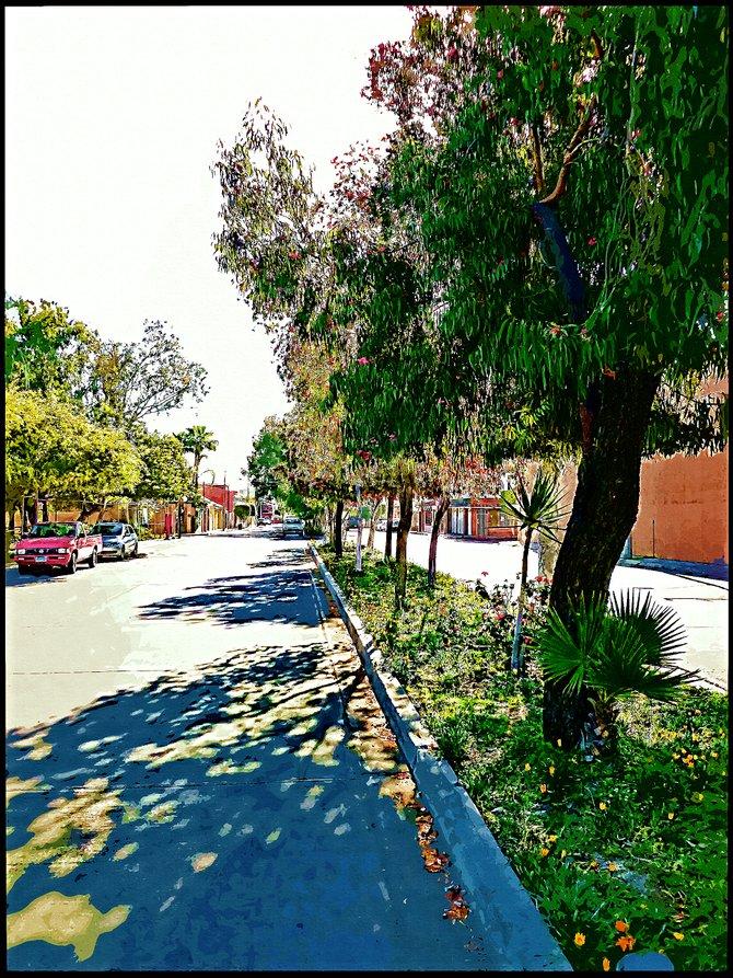 Neighborhood Photos TIJUANA,BAJA CALIFORNIA Street in Altabrisa section of Tijuana /Calle en el fraccionamiento Altabrisa en Tijuana.