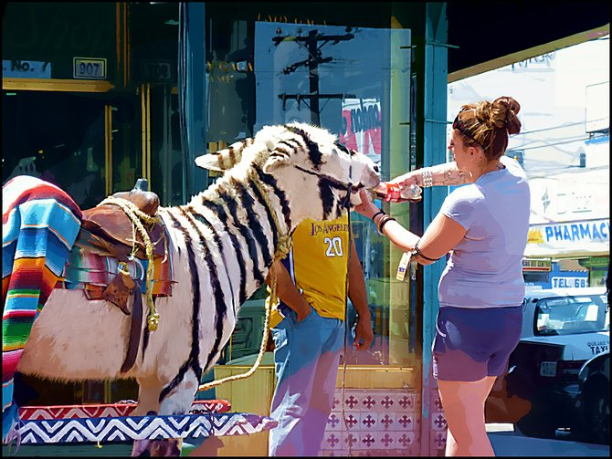 Travel Photo MEXICO Tourist with Donkey Zebra in Tijuana /Turista con Burro Cebra en Tijuana