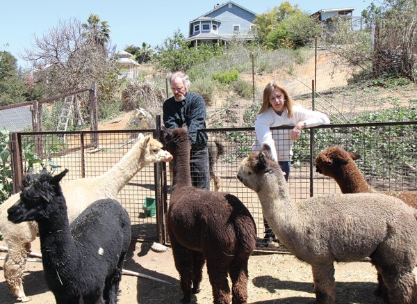 Dave and Barbara Davies run the A Simpler Time alpaca ranch and mill in Crest.