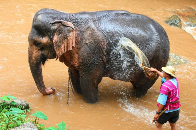 Laos Elephant Village Sanctuary