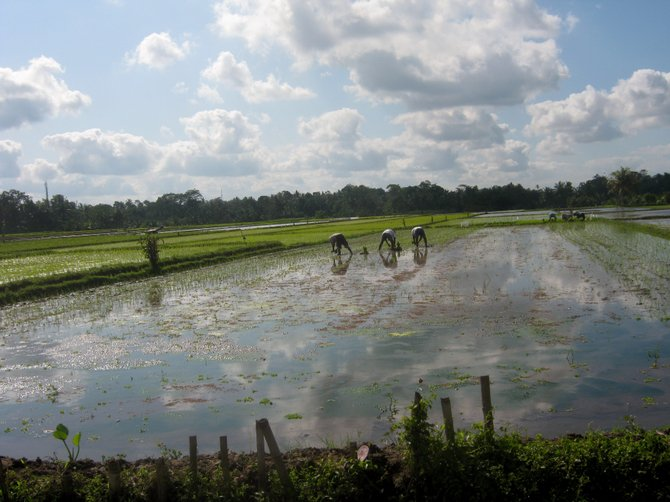 Workers in Bali rice fields