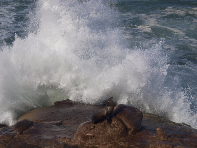 """I'm not afraid of anything!"" - Photo taken at La Jolla Cove"