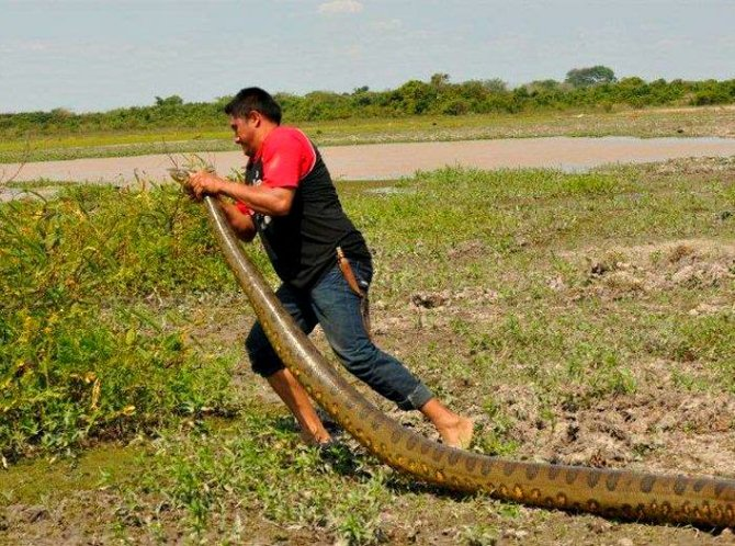 Big Anaconda at Los Hatos Reserve