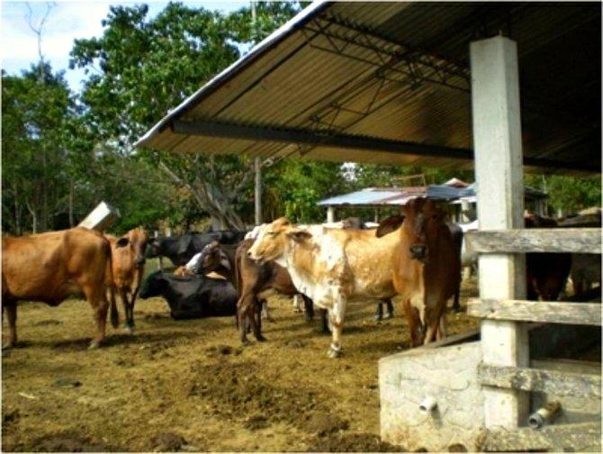More cowboys on a finca in Los Llanos