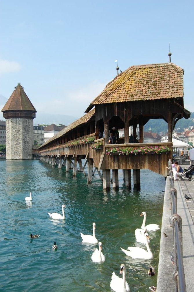 Swans swim languidly beside Lucerne's medieval Kapellbrücke.