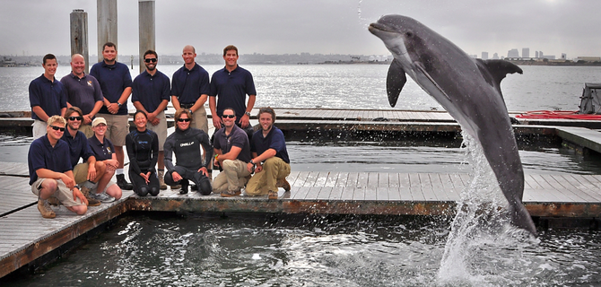 Members of the Space and Naval Warfare Systems Center Pacific Marine Mammal Team with one of the Navy's specially trained Atlantic bottle-nosed dolphins