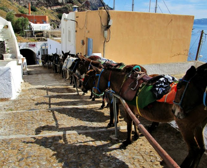 Donkeys waiting for passengers on Santorini