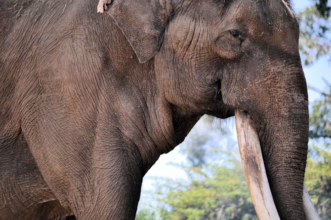 Elephant San Diego Zoo