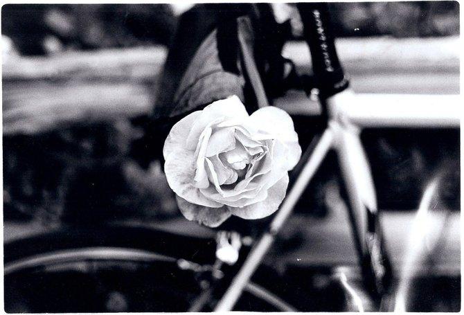 Flower. Bike.