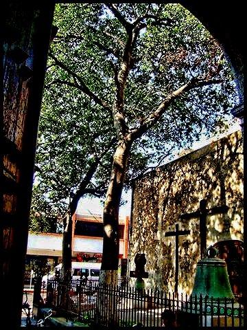 Travel Photos MERIDA,YUCATAN,MEXICO Door and trees outside church in Merida/Porton y arboles afuera de iglesia en Merida.