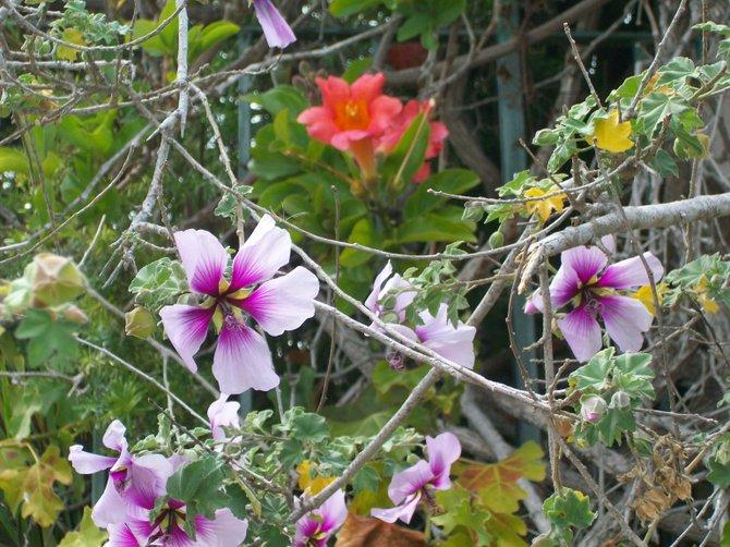 Tropical flowers bloom near San Diego Bay.