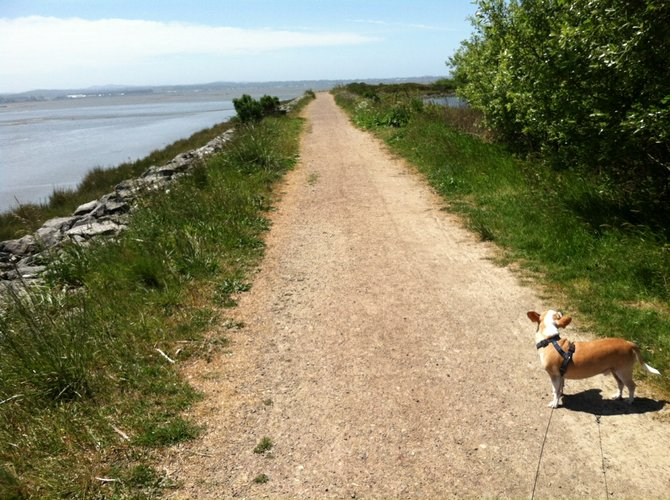 Dog-friendly marsh trail in Arcata.