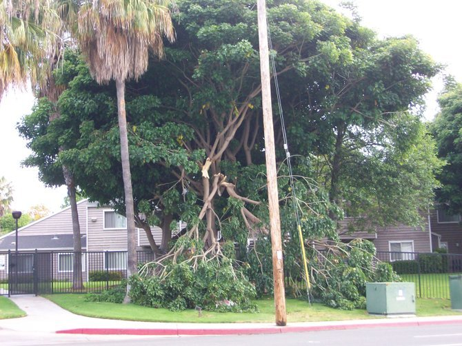 Broken tree near bus stop along West Pt. Loma Blvd.in Ocean Beach.