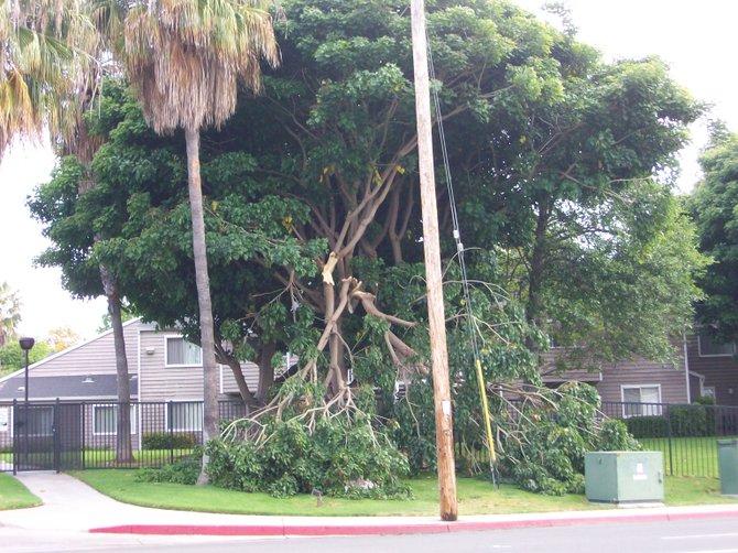Broken tree near bus stop along West Pt. Loma Blvd.in Ocean Beach.