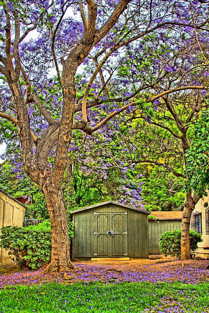 Sometimes you find neat things in obvious places. Like this shed in Balboa Park.  Balboa Park San Diego, CA