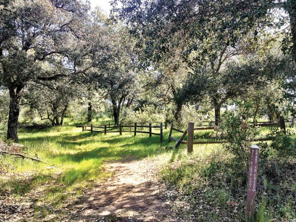 Santa Ysabel Open Space Preserve offers walks and picnic spots in pristine chaparral, woodlands, and grasslands.