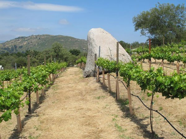 The property includes 20 acres of grapevines.