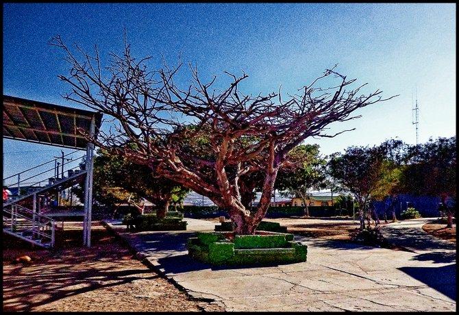 Neighborhood Photos TIJUANA,BAJA CALIFORNIA Old garden in Tijuana's Reforma Sports Complex in Otay/Jardin en Unidad Deportiva Reforma en Otay
