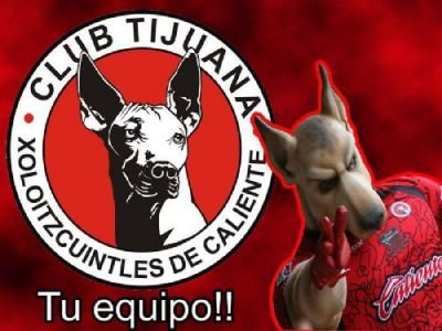 Tijuana Xolos logo and mascot