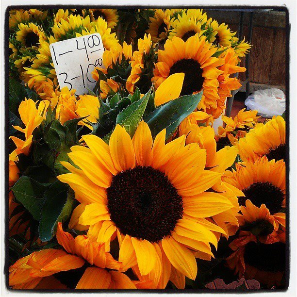 Sunflowers for sale at the Third ave Farmers Market in Chula Vista