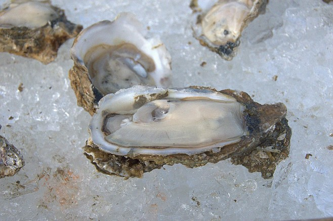 Franklin County oysters.