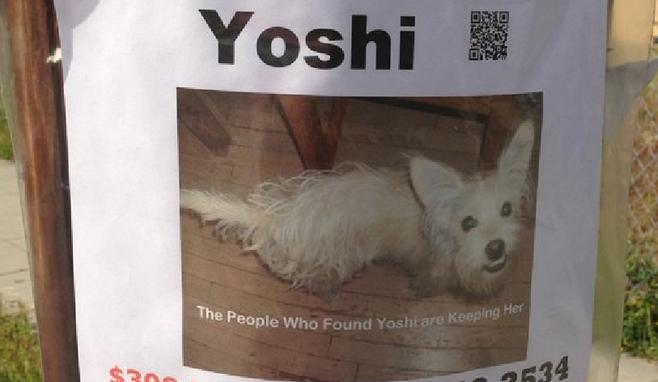 found dog san diego