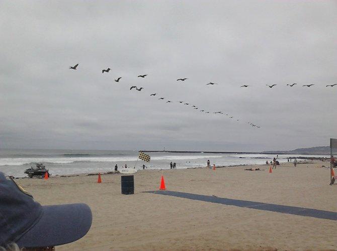 Pelicans over Ocean Beach