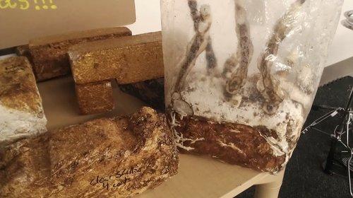 "Prototype of reishi mushrooms growing into organic building blocks for Phil Ross' ""Mol_d"""