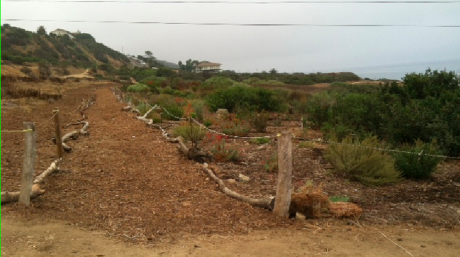 The native-plant garden is considered an exemplary use of native vegetation to control runoff and stop erosion.