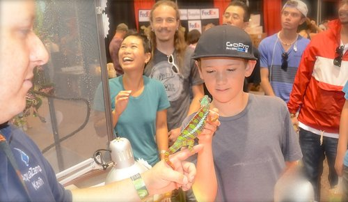 Joey Falcone, 11,  meets a chameleon. Photo Weatherston.