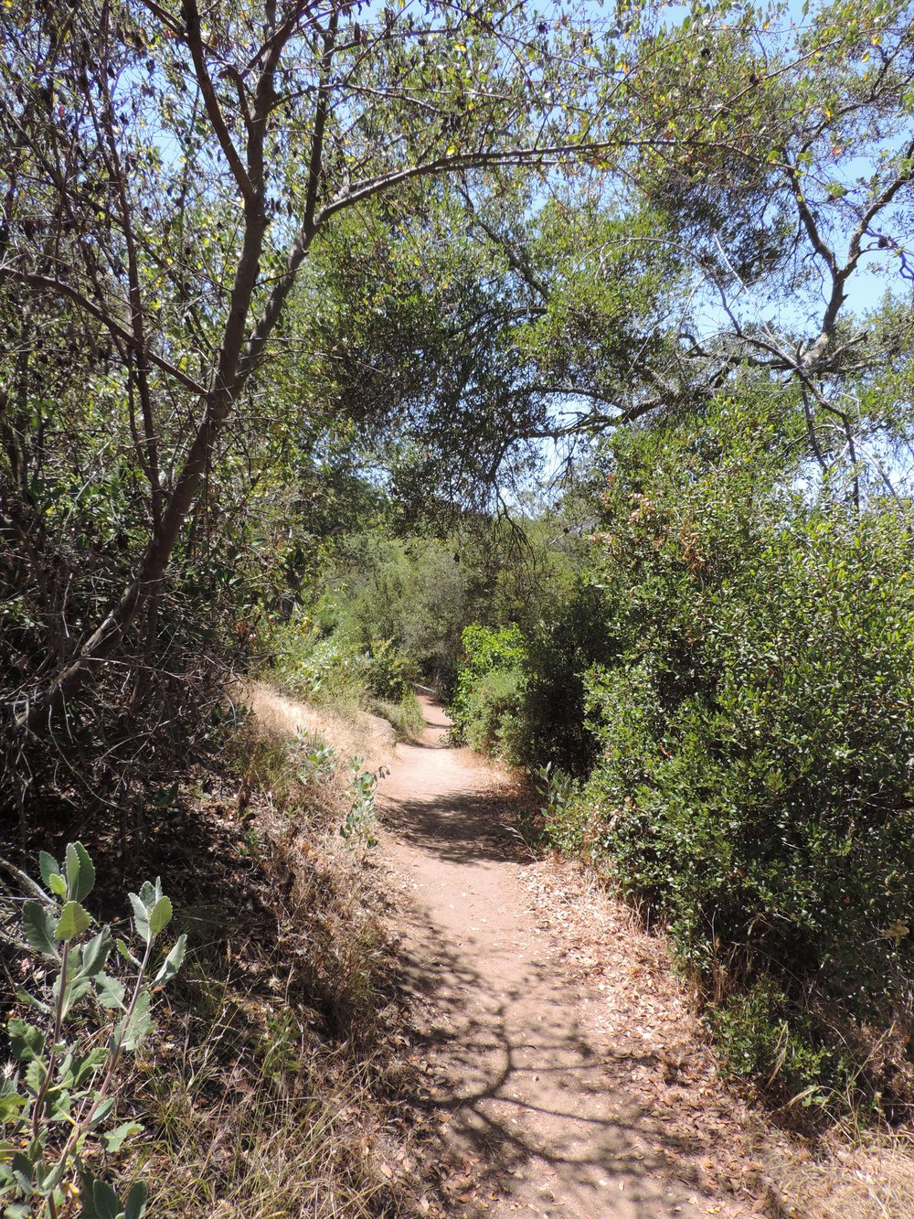 Dos Picos along the Ernie Trail