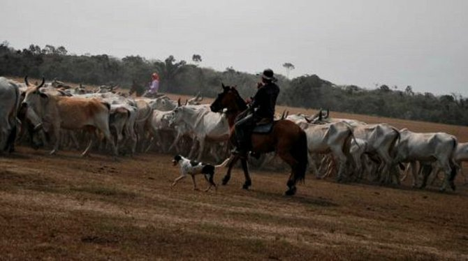 Llanero rounding up cattle on the finca.
