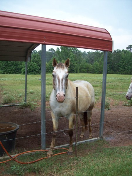 What would a Texas tale be without a horse in it!